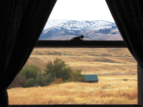 Can't you just taste the sweetgrass? Click to visit Chico Hot Springs, Pray, Montana